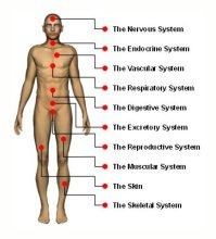 medicdirect Body System
